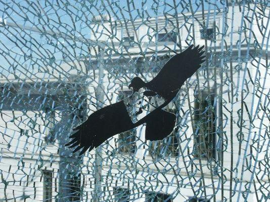 vogel auf glas