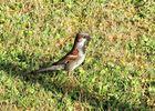 Vogel auf Nahrungssuche