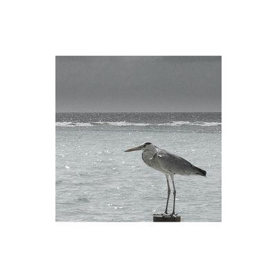 Vogel auf Vollpfosten-Minimalismus