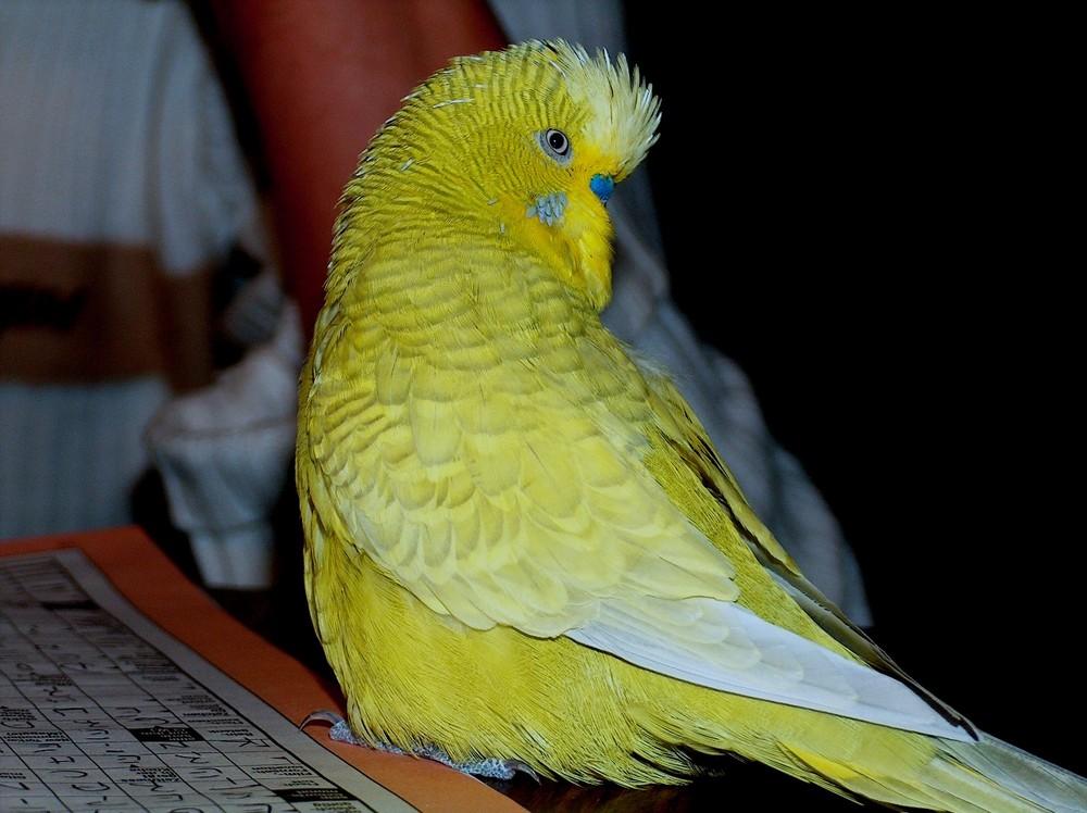 Vogel aus Australien mit 13 Buchstaben?