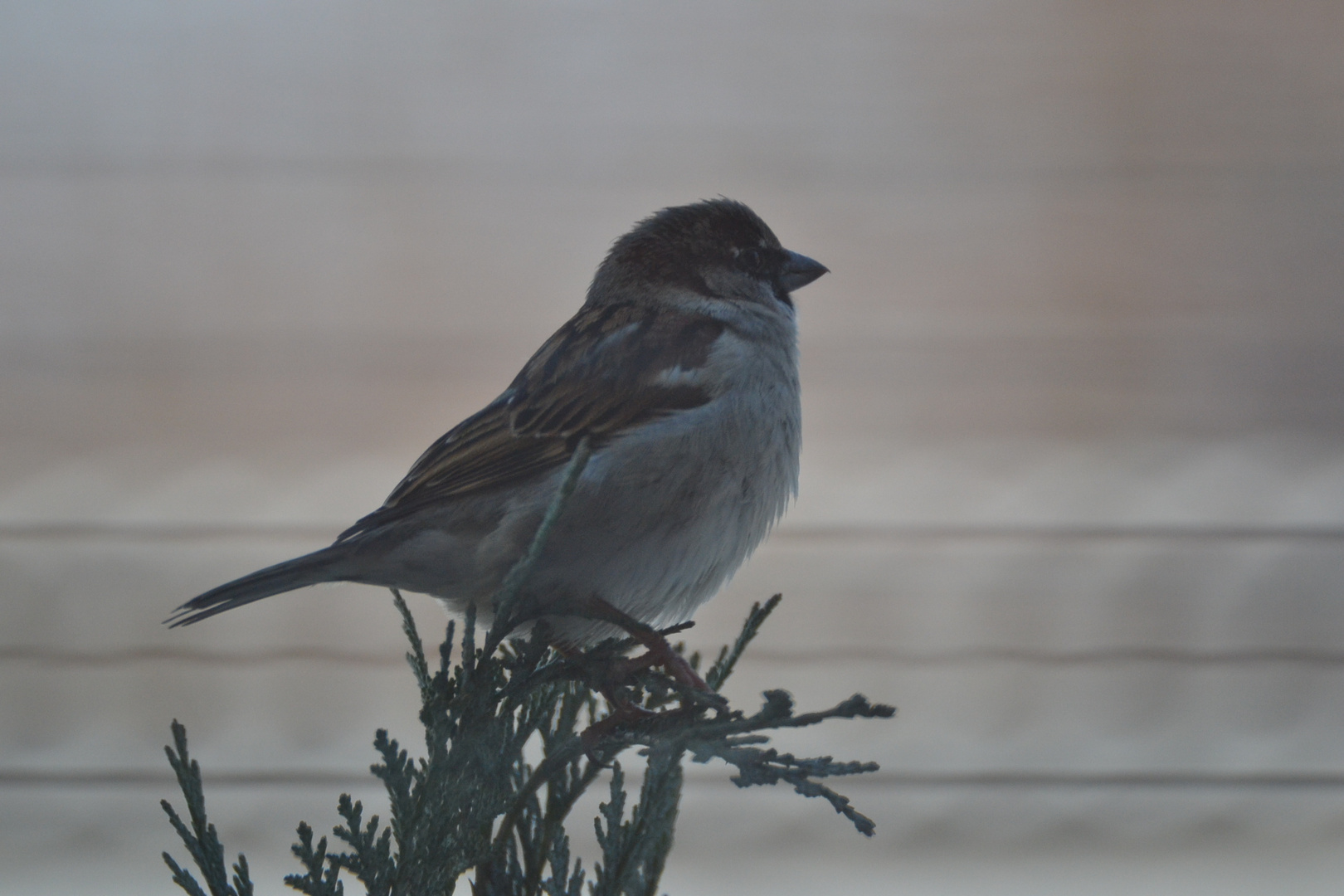 Vogel bei Dössen