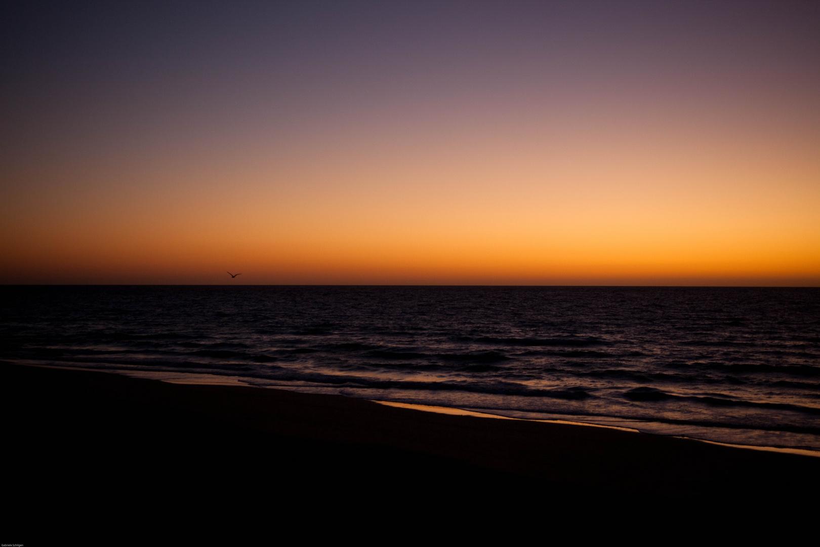 Vogel bei Sonnenaufgang