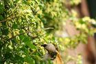 Vogel beim Füttern