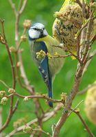 Vogel beim Knappern erwischt