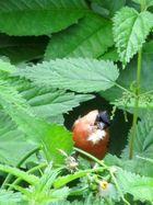 Vogel beim Nestbau