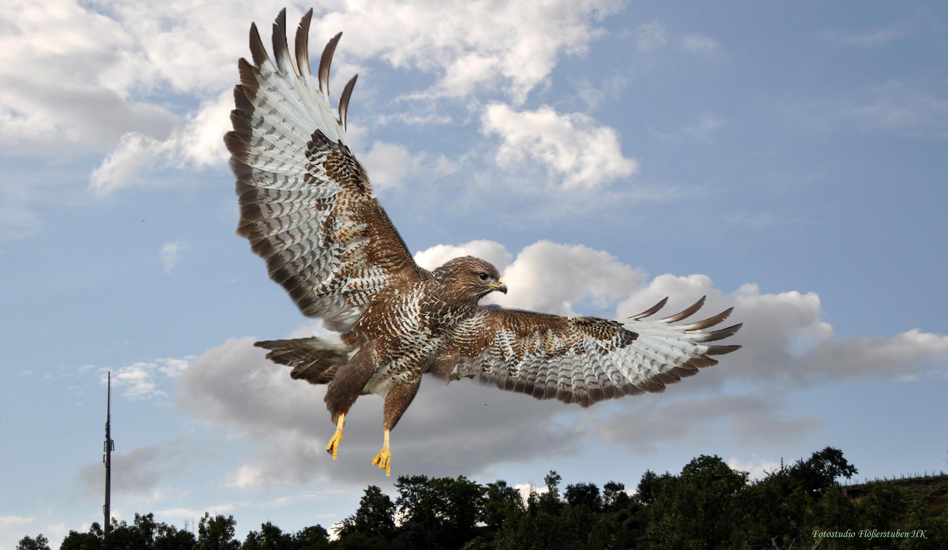 Vogel der Freiheit