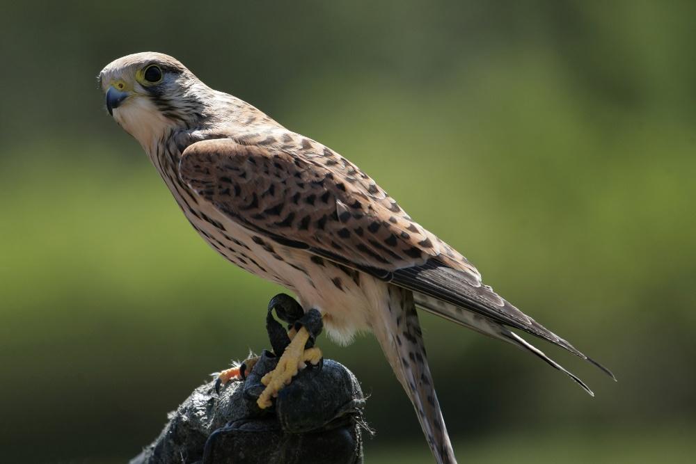 Vogel des Jahres 2007