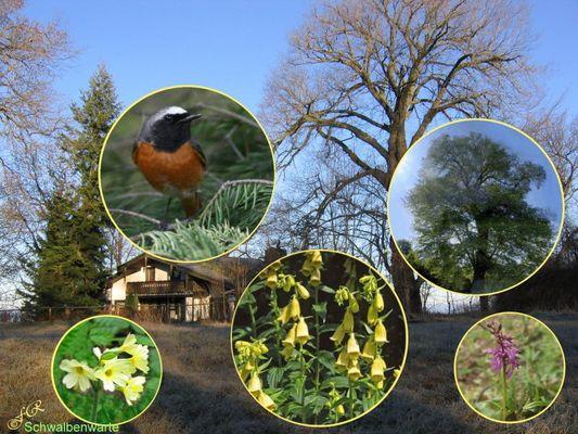 """""""Vogel des Jahres 2011"""" auf dem Burgberg Bad Harzburg  1/5"""