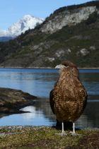 Vogel Feuerland Nationalpark