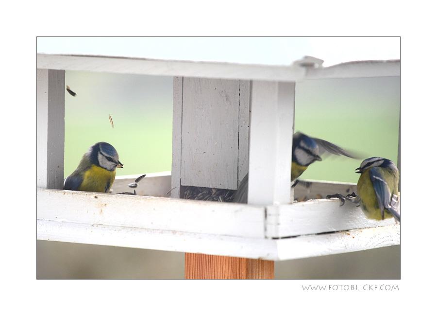 Vogel Haus Treiben #10 Ärger