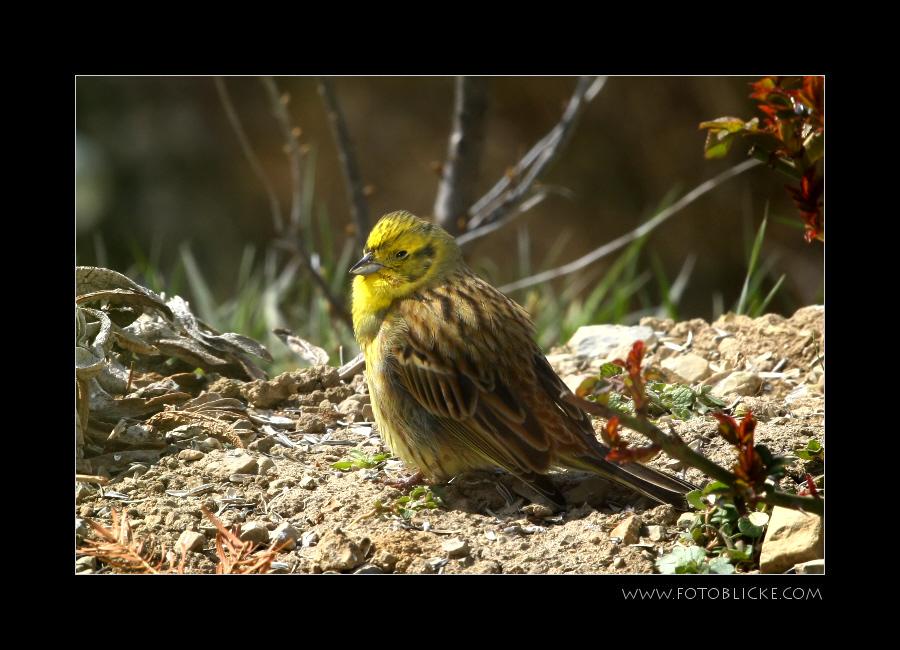 Vogel Haus Treiben #12 Sonne II