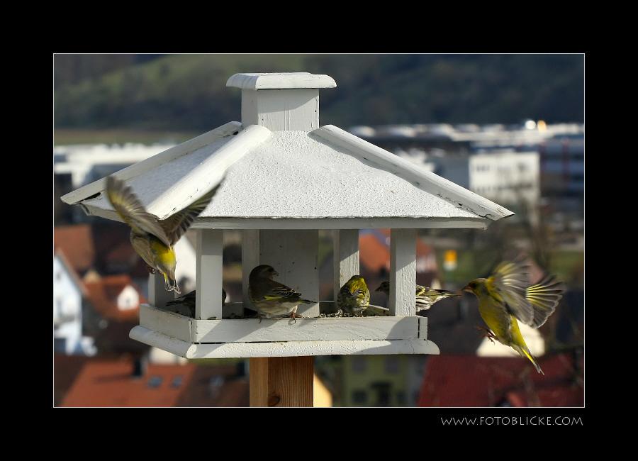Vogel Haus Treiben #17 Überfüllung