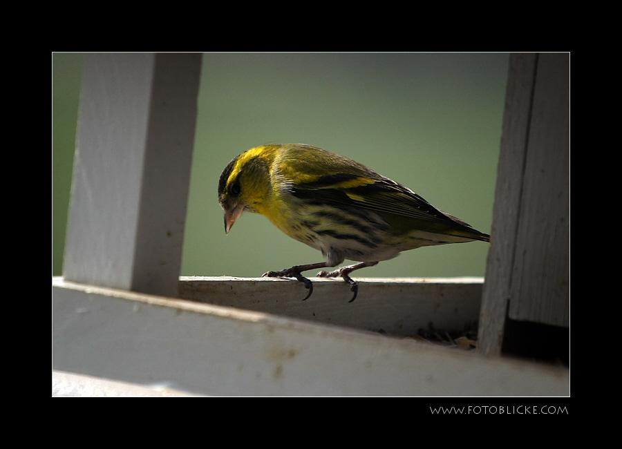 Vogel Haus Treiben #2 Sonnenbad