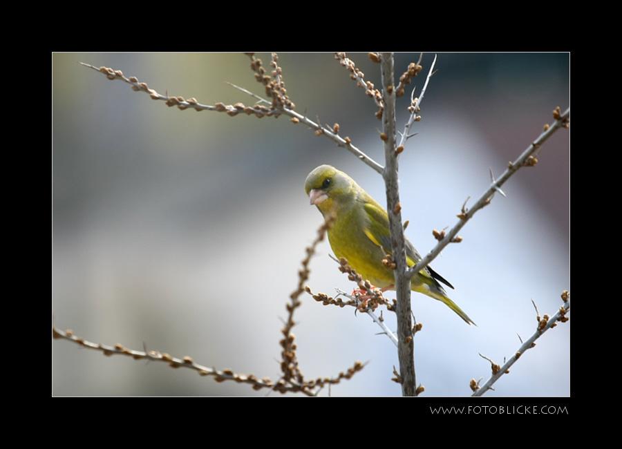 Vogel Haus Treiben #5 Beobachtung