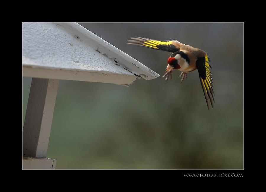 Vogel Haus Treiben #7 Anflug
