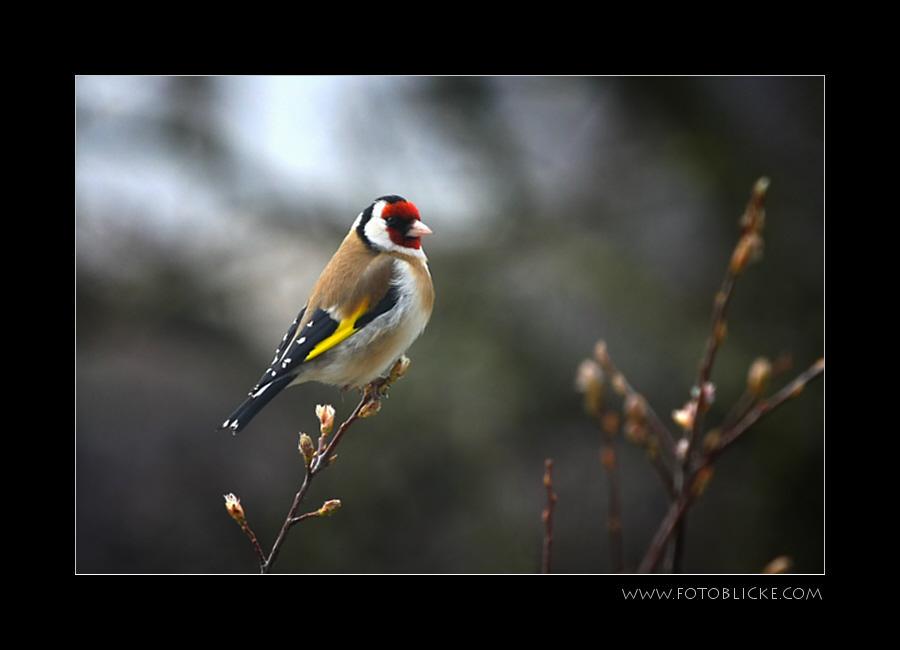 Vogel Haus Treiben #8 Ausruhen