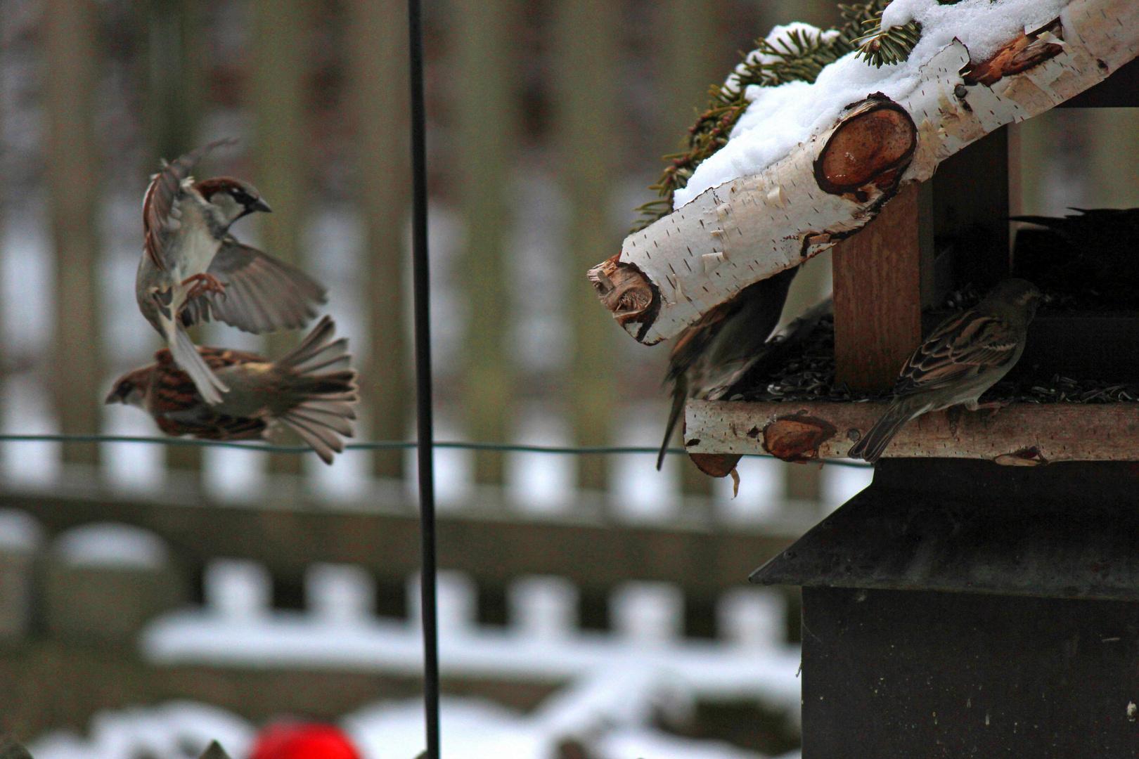 Vogel im Anflug (Versuch1)