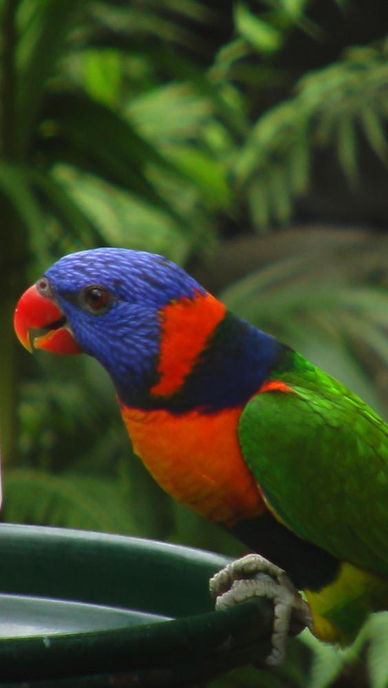 Vogel im Australia Zoo