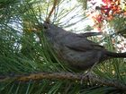 Vogel im Baum erstarrt