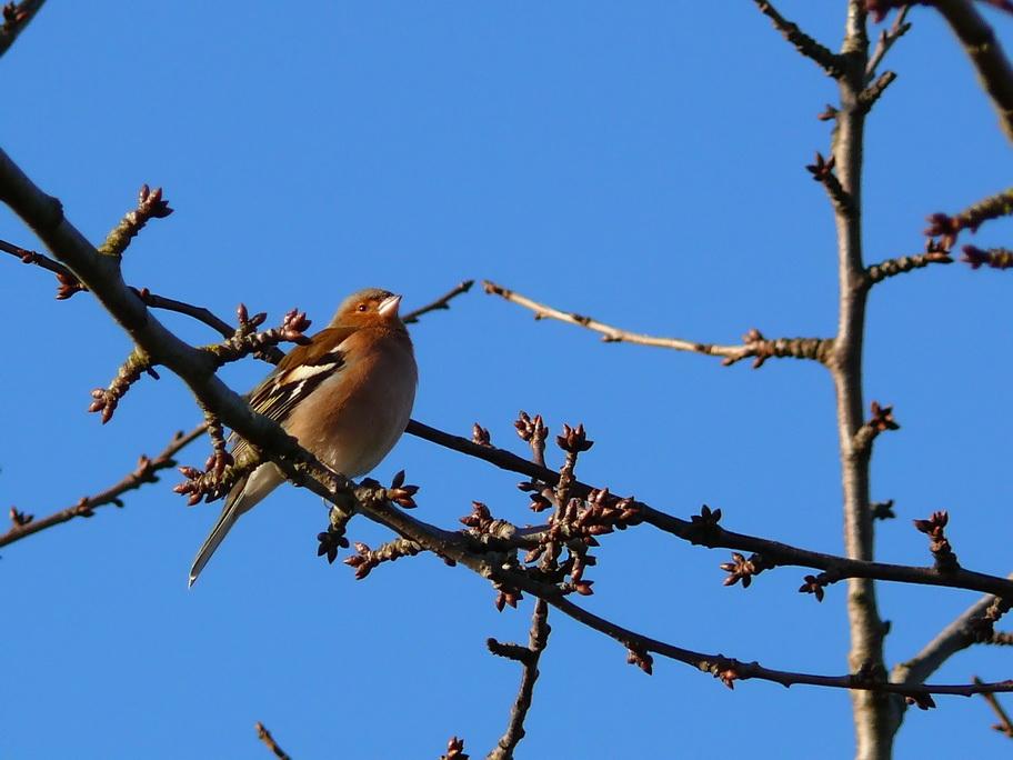 vogel im baum foto amp bild tiere wildlife wild lebende