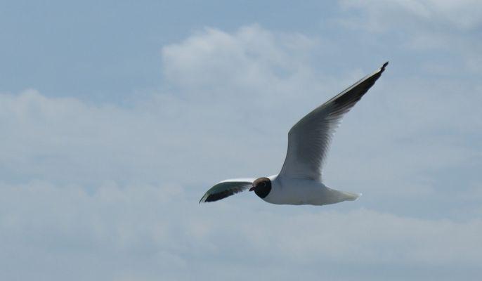 Vogel im Flug...