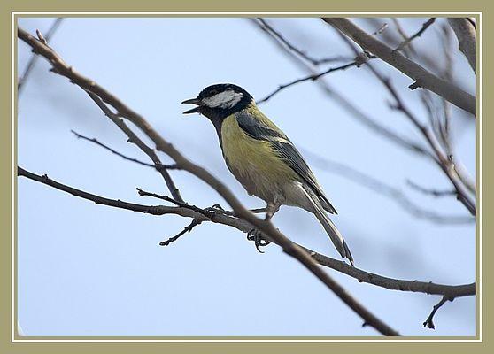 Vogel im Garten 2