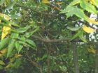 Vogel im Gebüsch