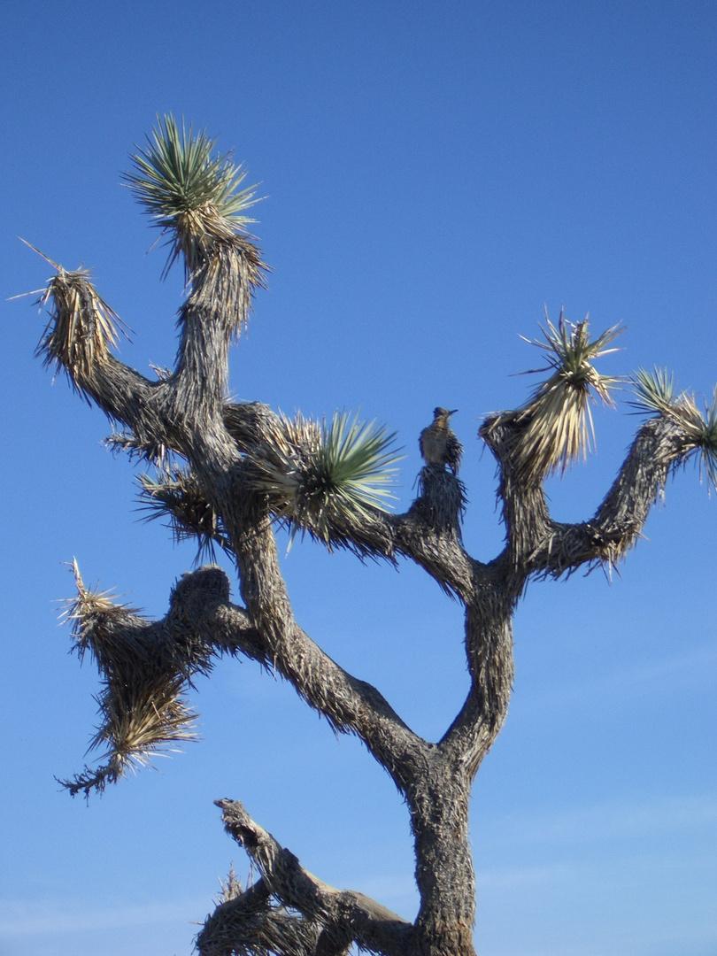 Vogel im Joshua Tree