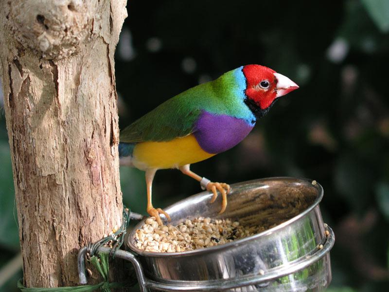 Vogel im Schmetterlingsgarten