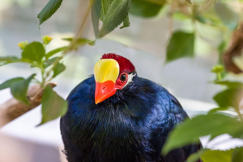 Vogel im Tierpark Hellabrunn