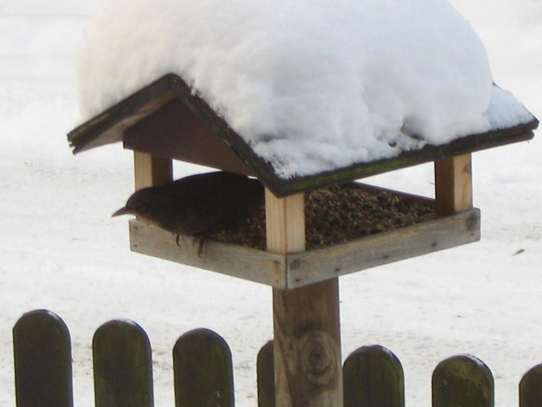 vogel im vogelhaus foto bild tiere wildlife wild. Black Bedroom Furniture Sets. Home Design Ideas