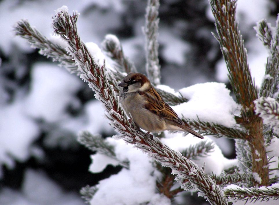 Vogel im Winter