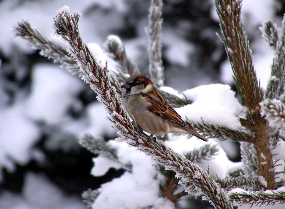vogel im winter foto bild tiere natur bilder auf fotocommunity. Black Bedroom Furniture Sets. Home Design Ideas