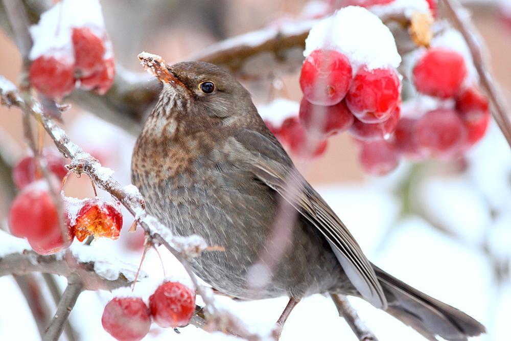 Vogel im Winter