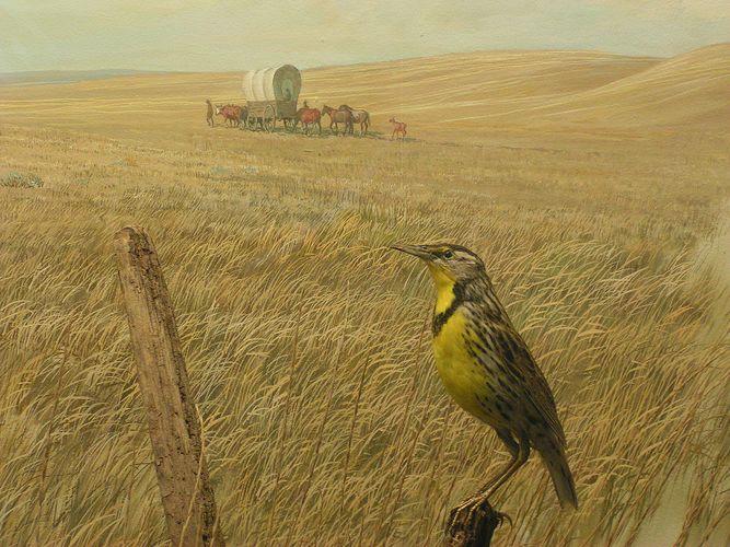 Vogel in der Prärie.