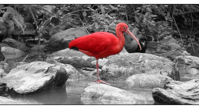Vogel in Rot