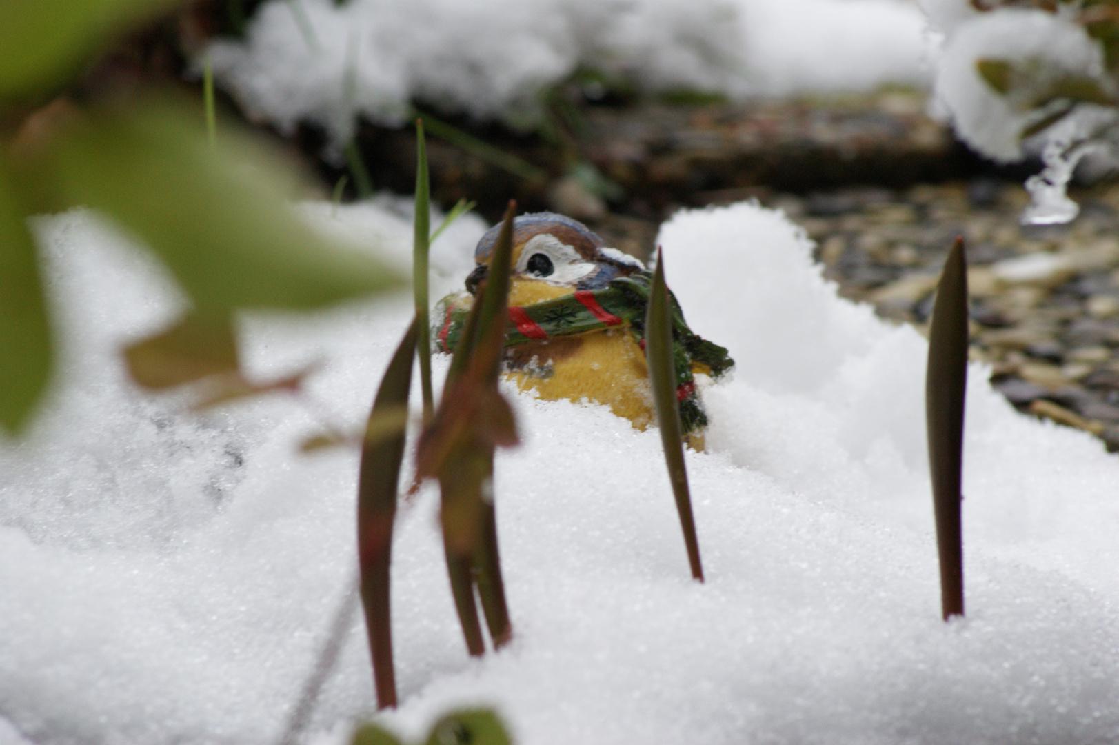 Vogel in Schnee und Grün
