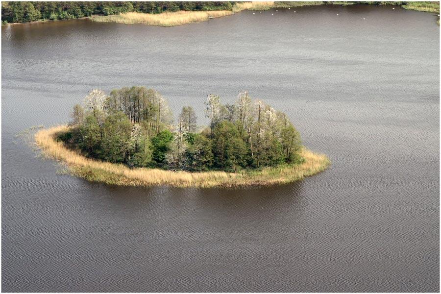 Vogel Insel