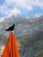 Vogel kackt auf Sonnenschirm