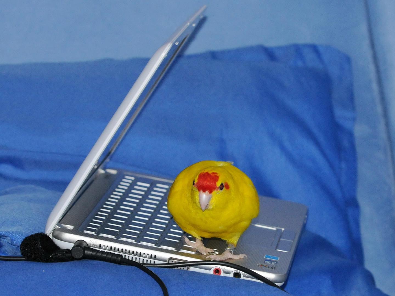 Vogel-Laptop