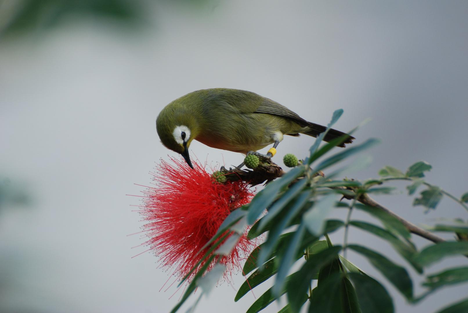 Vogel mit Blütenpracht