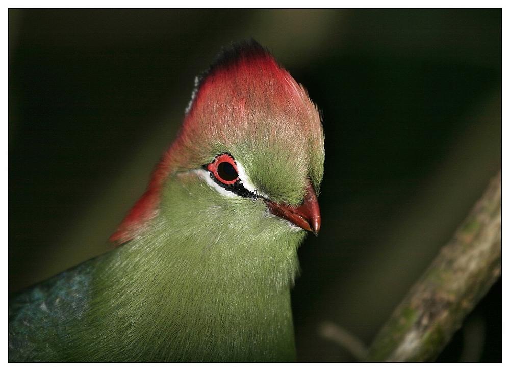 Vogel mit Star-allüren
