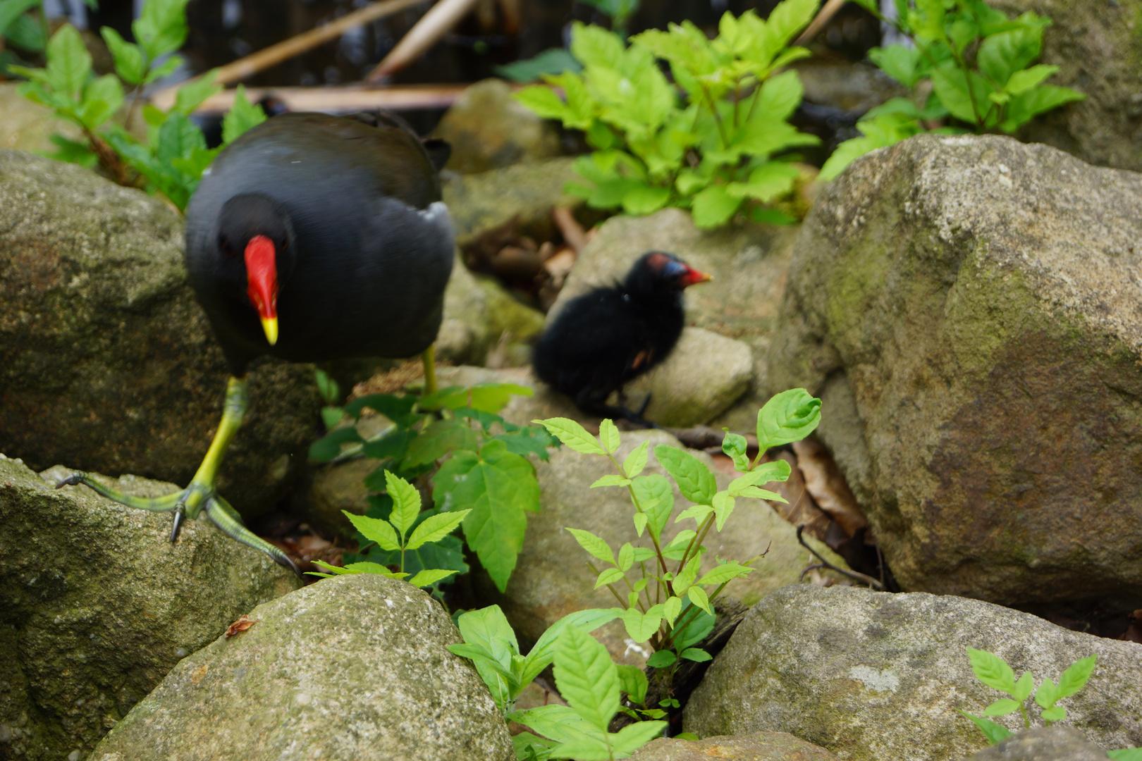 Vogel Mutti
