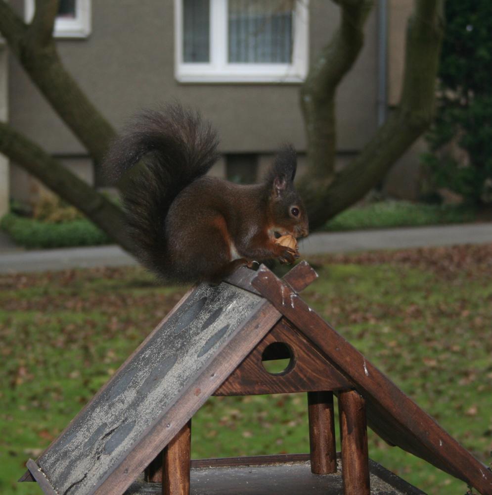 Vogel- oder Eichhörnchenhaus?!