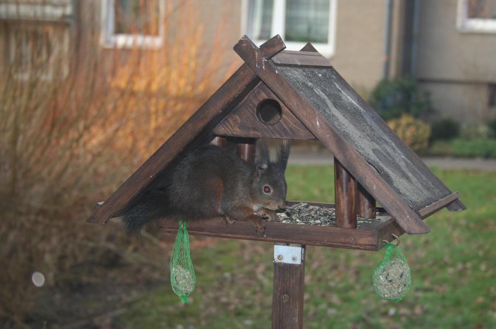 Vogel- oder Eichhörnchenhaus die Zweite ?!