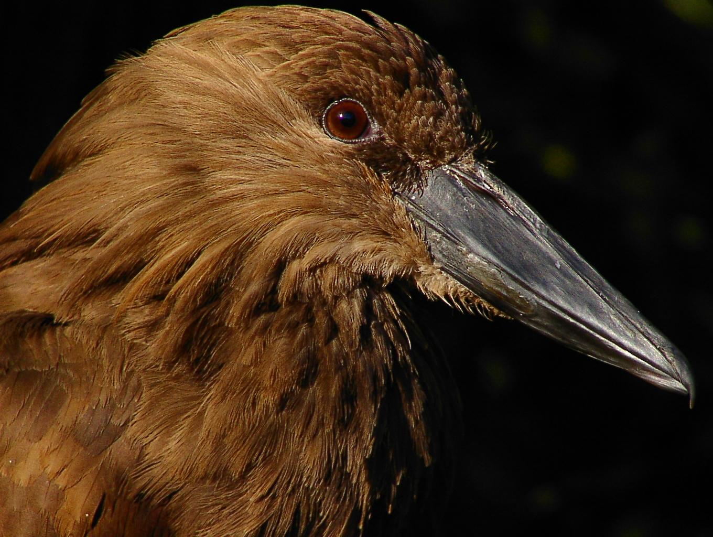 Vogel Portrait bearbeitet