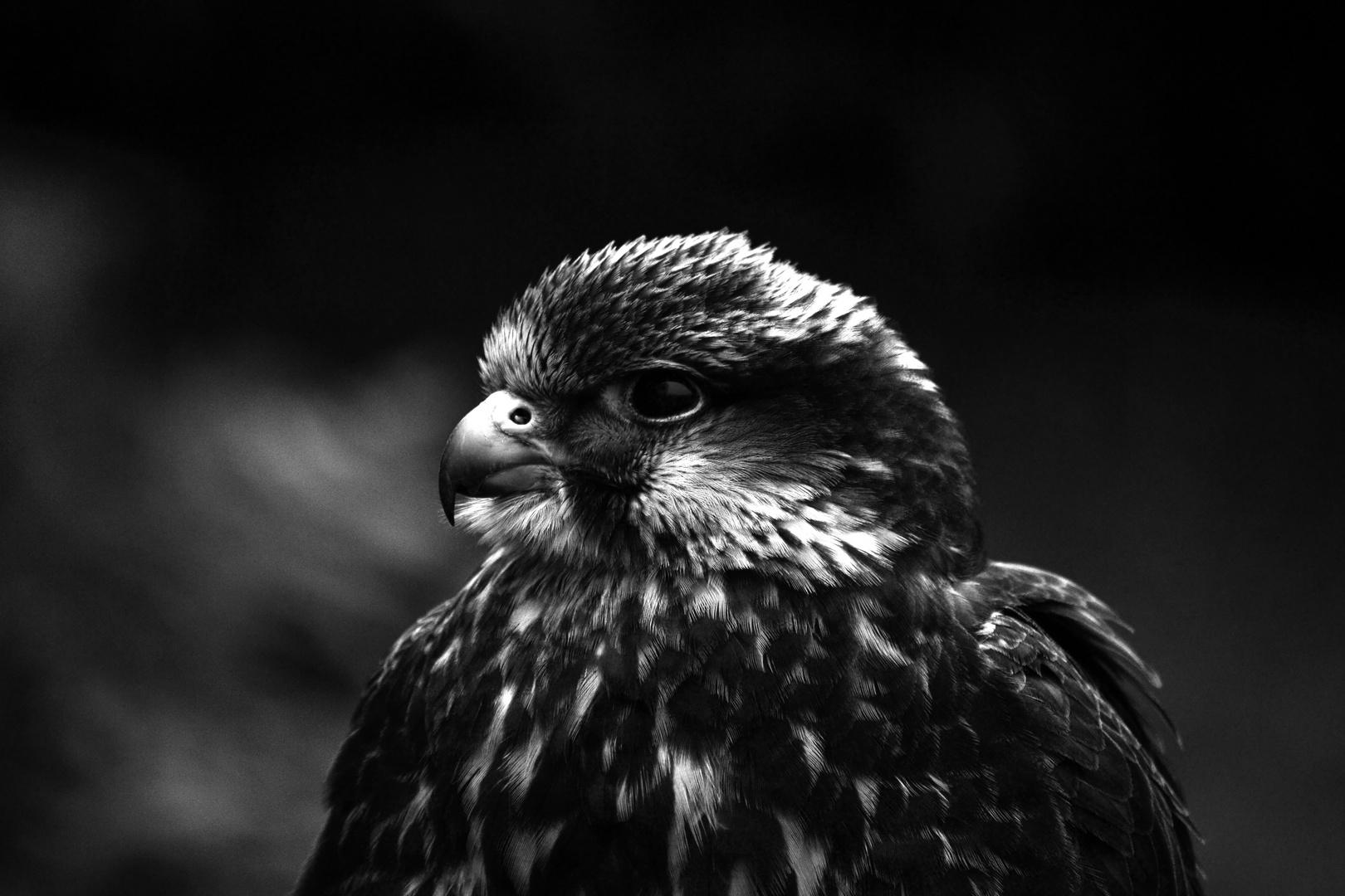 Vogel-Portrait