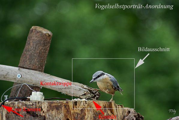 Vogel-Selbstporträt-Anordnung