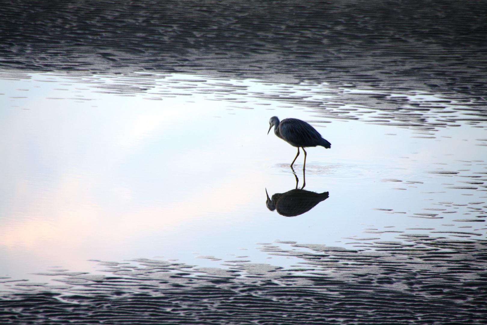Vogel sieht sich selbst