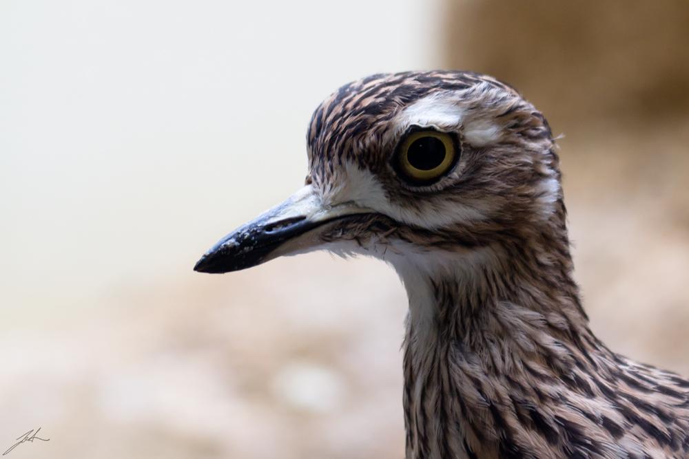 Vogel unbekannt